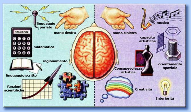 funzioni dei due emisferi cerebrali