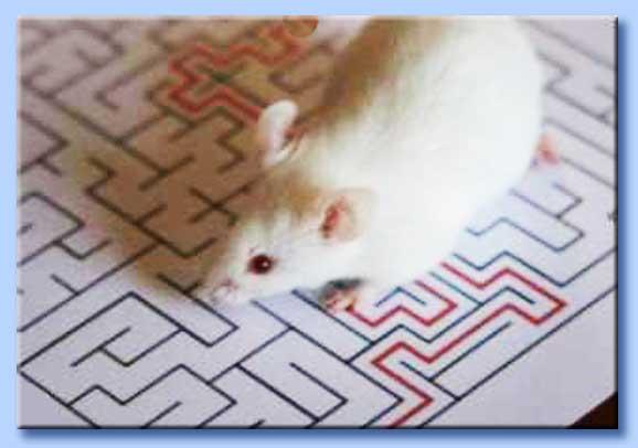 esperimento topi labirinto