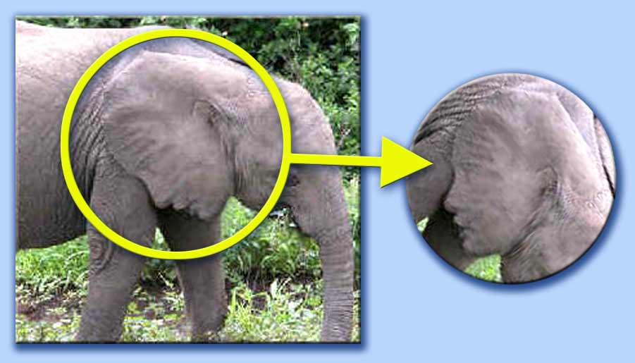L 39 elefante idiano - Elefante foglio di colore dell elefante ...